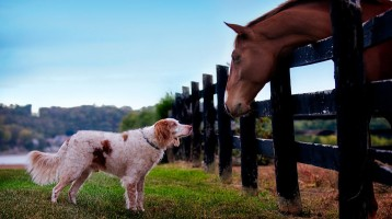dog_and_horse